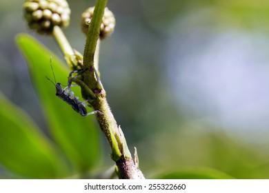 Bug on stem
