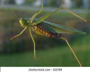 bug on windshield