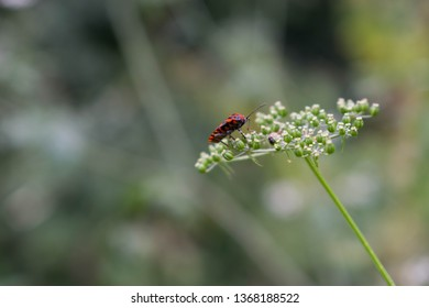 Bug sits on blossoming camomile.
