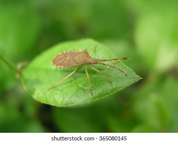 Bug sitting on a leaf