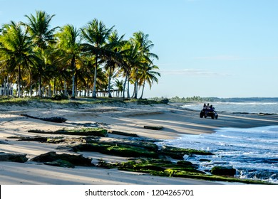 Buggy with tourists on the beach with coconut trees on the way between Corumbau Beach and Caraiva at dusk. Porto Seguro, Caraiva Village, Bahia/Brazil