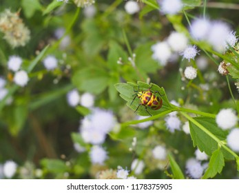Bug,Ladybug colorful cling on branch tree and flowers