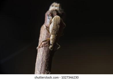 bugs macro shot