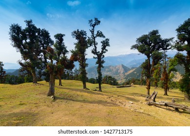 Bugyals, alpine pasture lands, or meadows, in higher elevation range of Himalayas in Uttarakhand, called nature's own gardens. View of Himalayas on Trekking route to Tunganath, temple of Lord Shiva.
