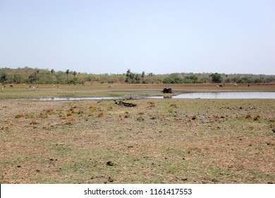 Buiba Mandinka village, the Gambia, Africa, May 26th, 2018:  african savannah wide angle dry land with water pond and blue sku, outdoors on a sunny day