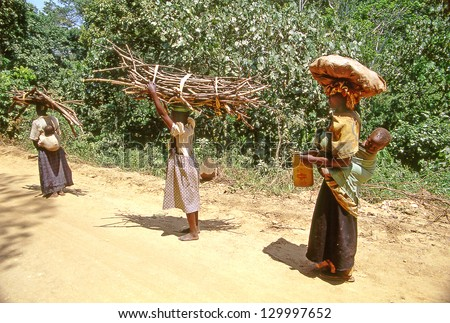 BUIKWE REGION, UGANDA - JULY 26: An unidentified farmers carry cultivars for sale on July 26, 2004 in Buikwe region, Uganda. People in rural areas of Uganda depend on farming.