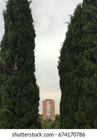 Building between trees