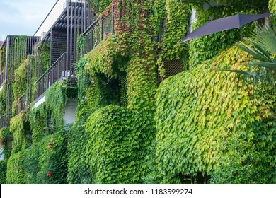 Building with climber plants, ivy growing on the wall. Ecology and green living in city, urban environment concept.