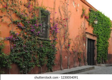 Building Exterior with Pink Painted Walls Greenery and Traditional Wood Door in San Miguel de Allende Mexico