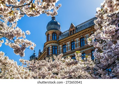 Building framed in cherry blossom. Spring has arrived in Gothenburg and cherry trees are in full bloom. A season that is perceived as an awakening for most people and even animals.