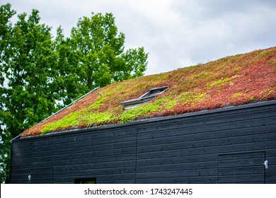 Building with a green roof completely covered with vegetation. Extensive green sustainable sedum cassette roof with succulent plants. Roof greening with succulents. Skylight in the middle of the roof