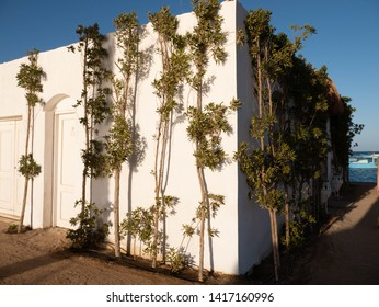 Building near the sea with plants on the walls
