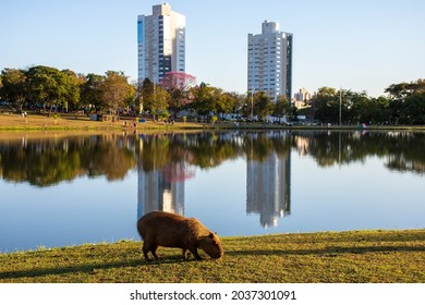 buildings with lake reflection in the Parque das Nações Indigenas in the city of Campo Grande, Mato Grosso do Sul, Brazil