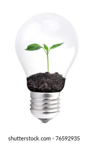 Bulb with green plant