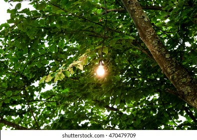 bulb in the tree