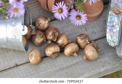 bulbs of flowers on a gardening table