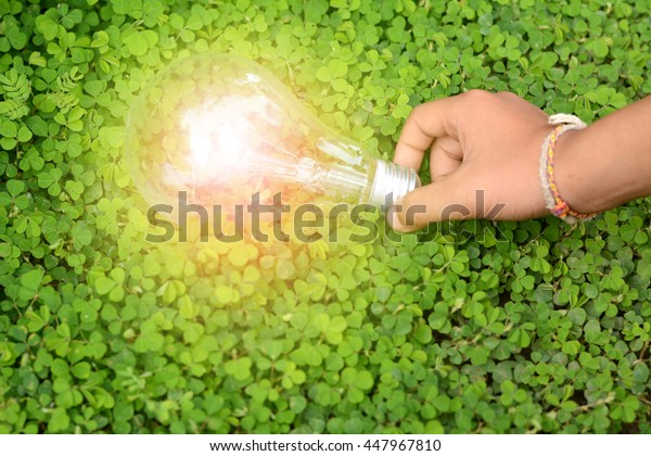 bulbs in hand on the green grass