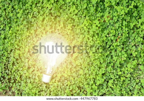 bulbs on the green grass