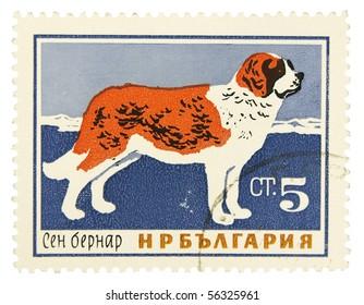 BULGARIA - CIRCA 1960: A stamp printed in Bulgaria showing St. Bernard dog, circa 1960