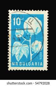 BULGARIA - CIRCA 1967: A stamp printed in Bulgaria showing flower, circa 1967