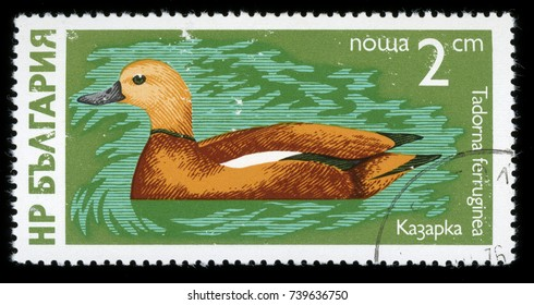 "BULGARIA - CIRCA 1976: A stamp printed in Bulgaria shows image of a Ruddy Shelduck, ""Waterfowl"" series"