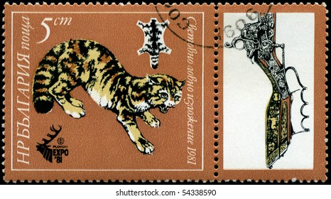 BULGARIA - CIRCA 1981: A Stamp shows image of a Feline Predator in the theme of World Hunting Exhibition, series, circa 1981