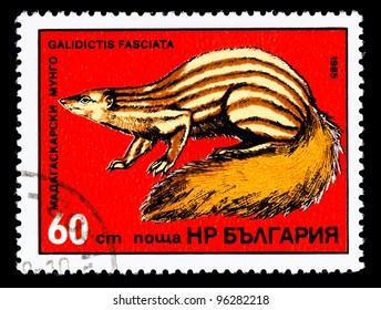 BULGARIA - CIRCA 1985: A stamp printed in Bulgaria shows Galidictis Fasciata, circa 1985