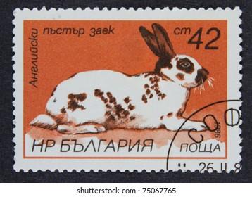 BULGARIA - CIRCA 1986: A stamp printed in Bulgaria, shows a rabbit, Hares and Rabbits series, circa 1986.
