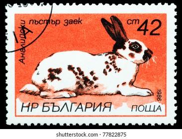 BULGARIA - CIRCA 1986: A stamp printed in Bulgaria, shows a rabbit, Hares and Rabbits series, circa 1986