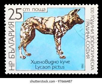 BULGARIA - CIRCA 1988: A stamp printed in BULGARIA shows African Wild Dog - Lycaon pictus, series animals, circa 1988