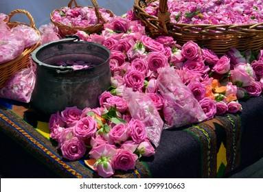 Bulgarian oil rose