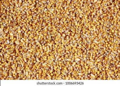 Bulk of corn grains