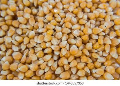 Bulk cron grains close up for background
