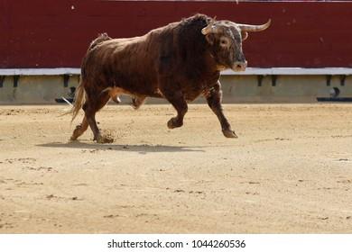 bull in bullring in spain