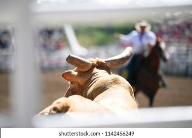 Bull and cowboy at rodeo