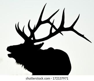 bull elk calling valentine