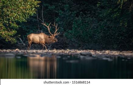 Elk Crossing High Res Stock Images Shutterstock