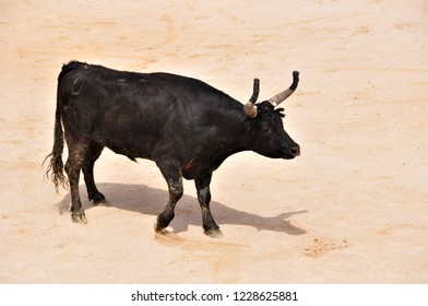 bull games in the arena