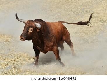 bull in landscape