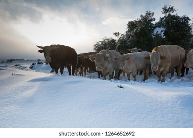 bull market - tough leadership