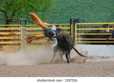 Bull rider falling off bull