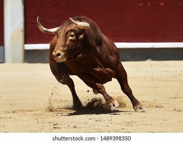 bull running in spanish bullring