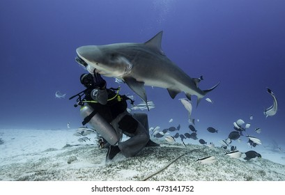 Bull shark feeding dive in Playa Del Carmen on the Yucatan Peninsula Mexico. Image shows the feeder in a chainmail suit feeding the shark surrounded by tropical fish.