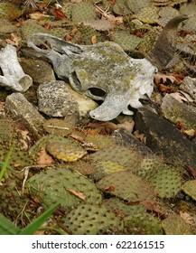 bull skull cactus