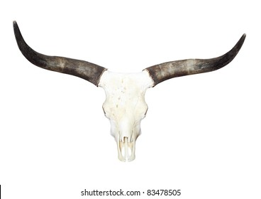 Bull skull with long horns isolated on a white background.