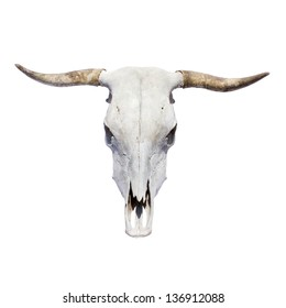bull skull - top view, isolated