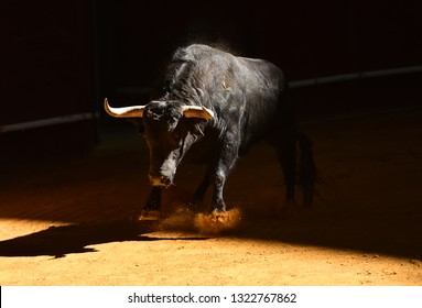 Bull in spanish bullring