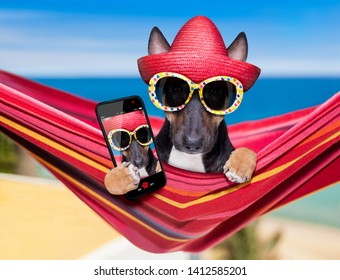 bull Terrier  dog resting and relaxing on a hammock or beach chair under umbrella at the beach ocean shore, on summer vacation holidays taking a selfie with smartphone or phone