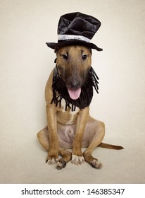 Bull Terrier puppy dressed up in hat and fringe collar