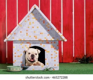 bulldog in doghouse